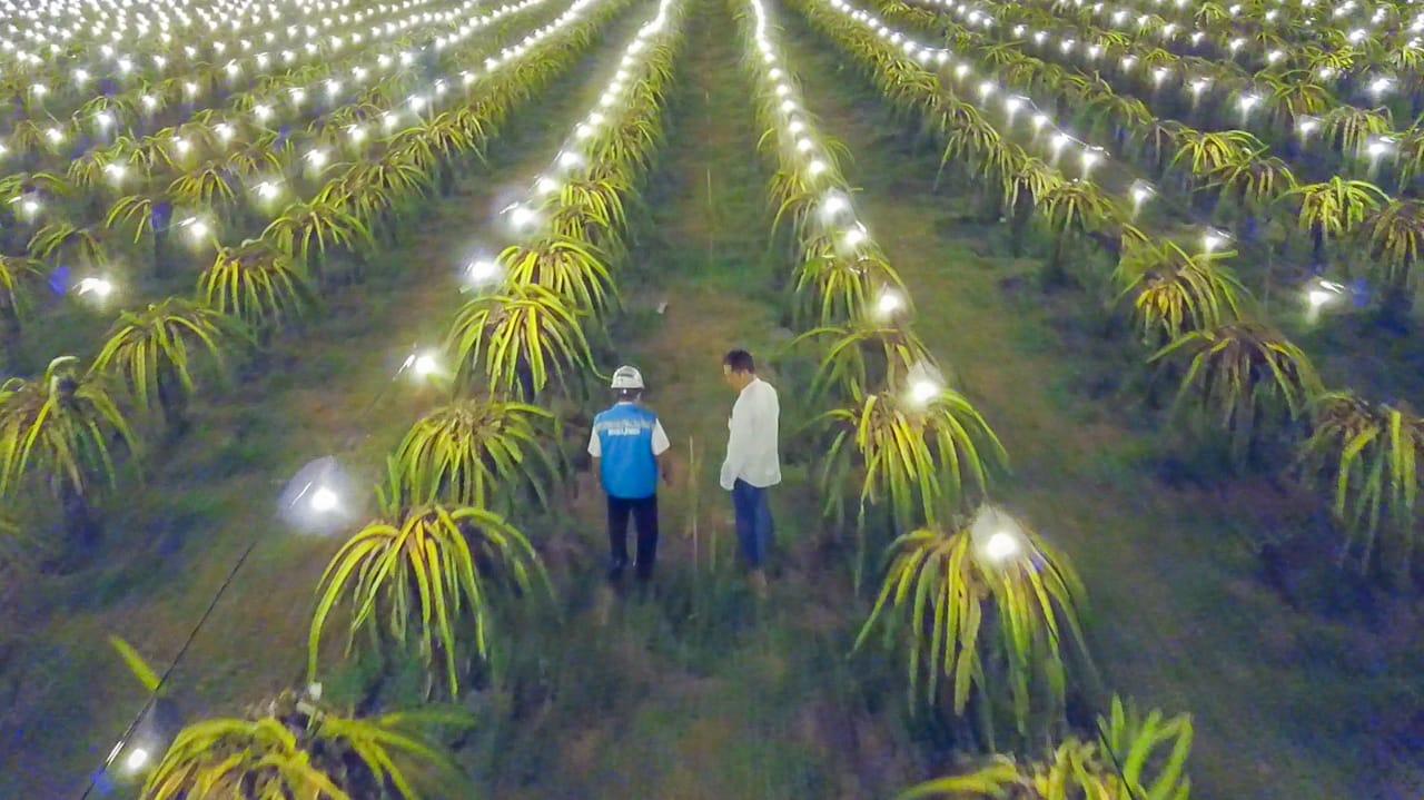 Program Electrifying Agriculture jadi salah satu unggulan program TJSL pln untuk dukung perekonomian di sektor pertanian. (Foto : Istimewa)